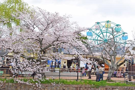 okazakisakura14