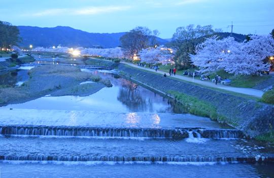 yorusakura1