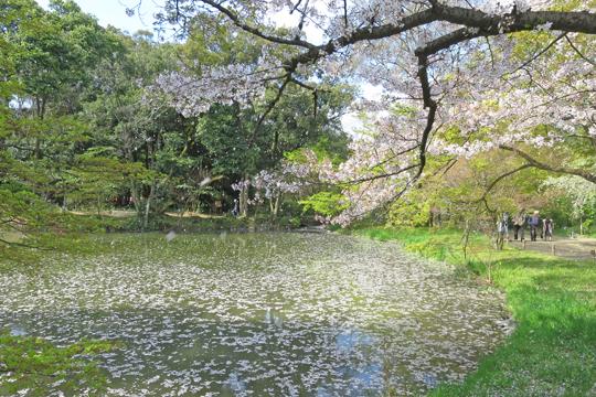 syokubutuensakura21
