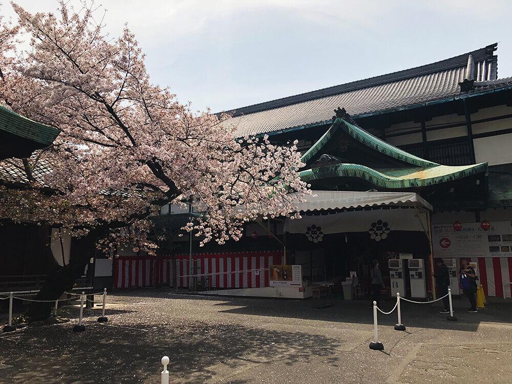 miyakoodori_tokubetuten_03