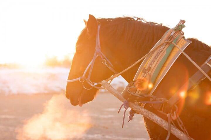 北海道で出合った「ばんえい競馬」を存分に楽しんでみた