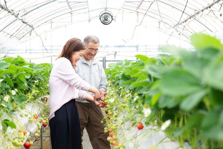 ルビー色に輝くいちご「あまおう」の町、福岡県糸島で美味しさを追求してきた