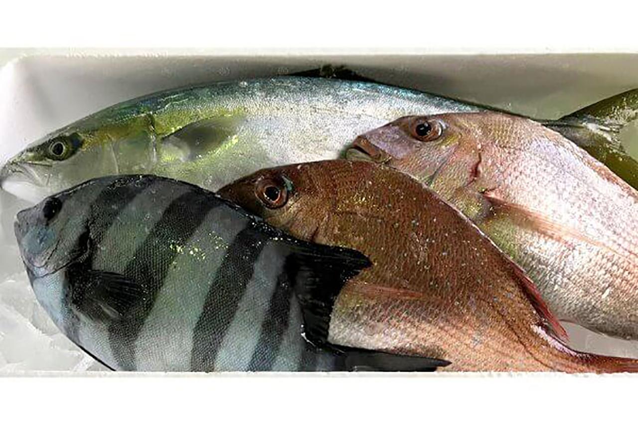 舞鶴漁港直送 鮮魚のイメージ