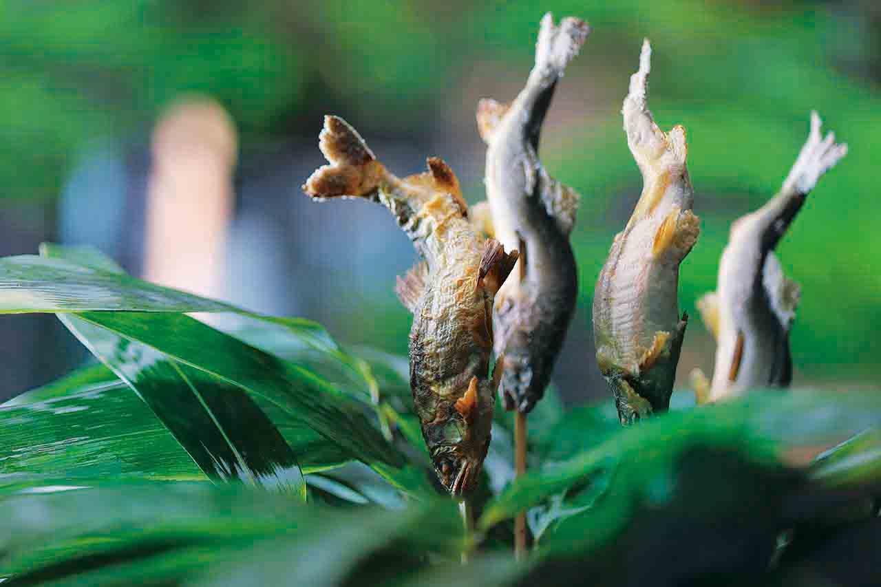 熊笹に囲まれた鮎の塩焼きはインパクト抜群。たで酢をつけてさっ ぱりといただく(写真は4人前)