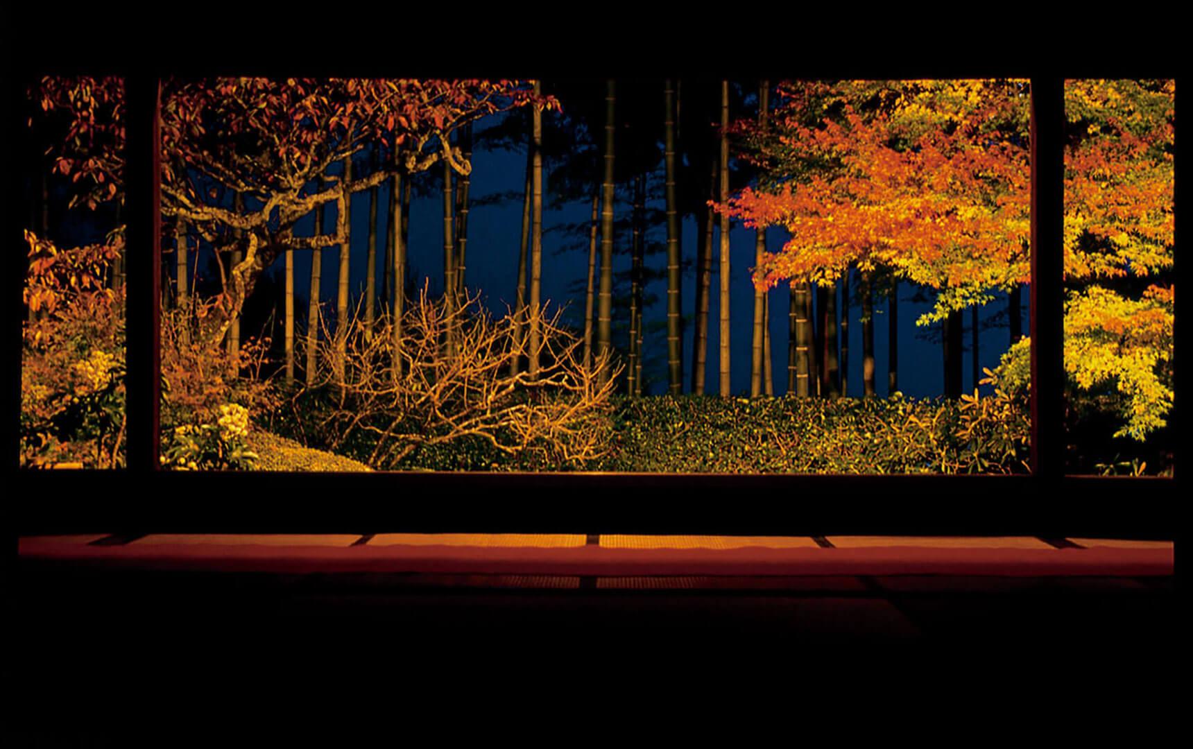 京都・紅葉ライトアップ