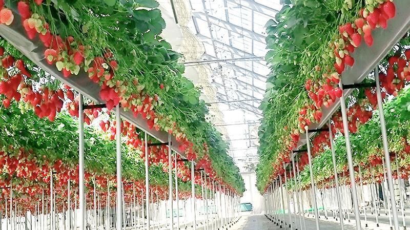 berryfarm02
