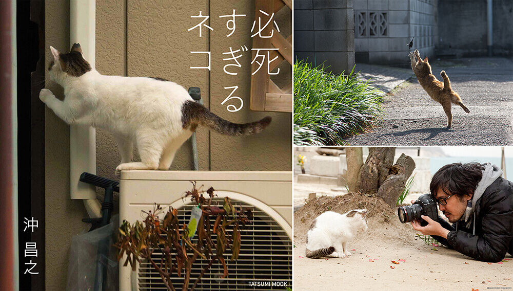 「必死すぎるネコ」の画像検索結果