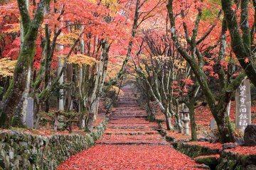 美しき滋賀の紅葉スポット