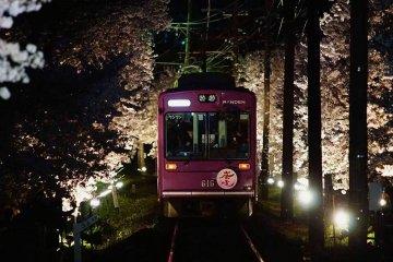 嵐電の桜のトンネルライトアップ&夜桜電車