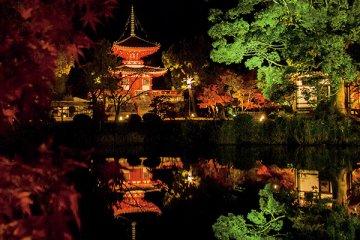 京都・紅葉ライトアップスポットをチェック