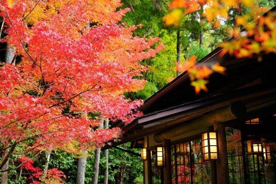 京都・紅葉が見える店