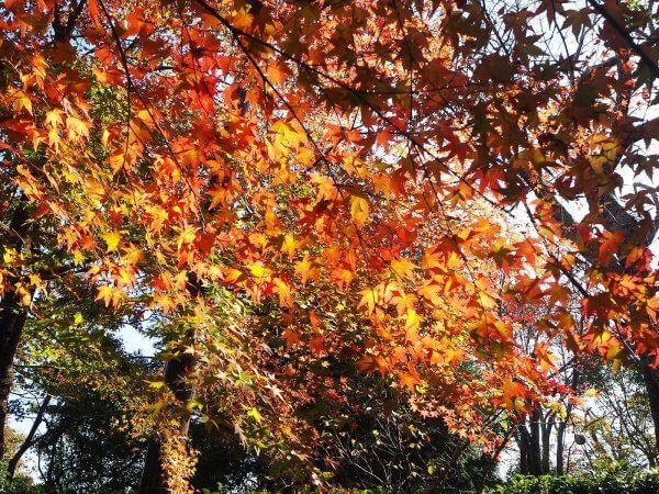 1120_kouyou_arashiyama_02