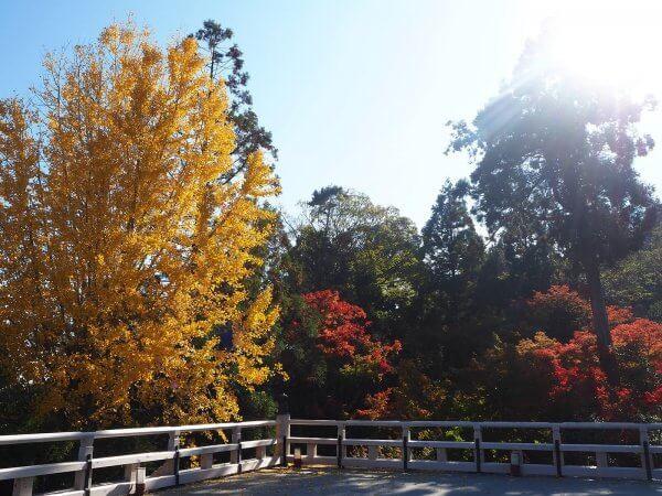 1120_kouyou_arashiyama_04