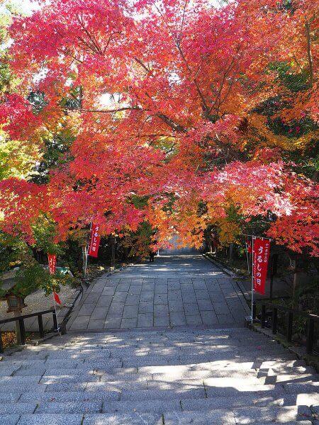 1120_kouyou_arashiyama_05