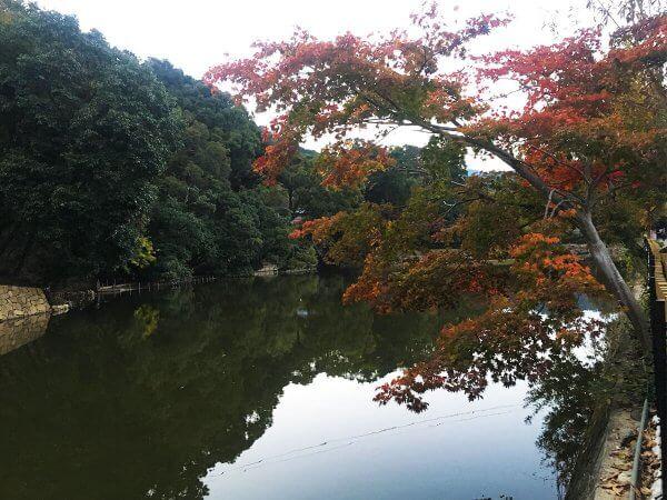 1120_kouyou_arashiyama_12