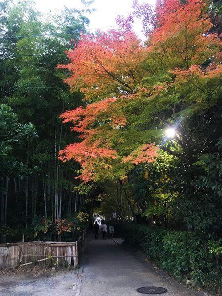 1120_kouyou_arashiyama_13