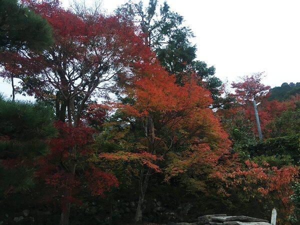 1120_kouyou_arashiyama_14