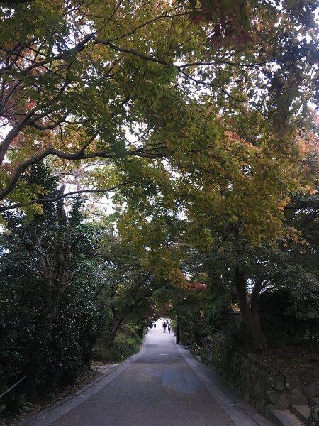 1120_kouyou_arashiyama_15