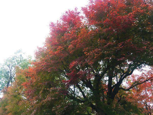 1120_kouyou_arashiyama_16