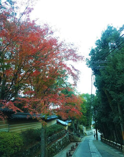 1120_kouyou_arashiyama_17