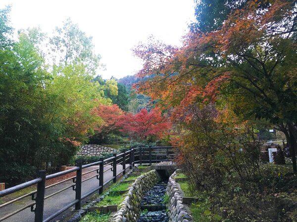 1120_kouyou_arashiyama_18