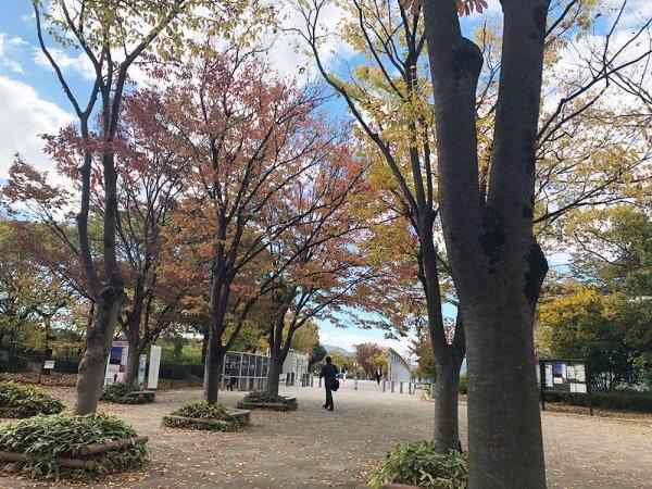 京都・紅葉速報2018!【第2弾】梅小路公園〜東福寺エリア ただいま4〜5割色づき