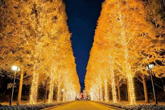 京都 クリスマスイルミネーション2018