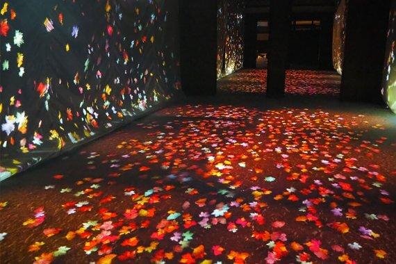 これはお見事!雅な世界観『秋季特別ライトアップ FLOWERS BY NAKED 2018 −京都・二条城−』に行ってきた
