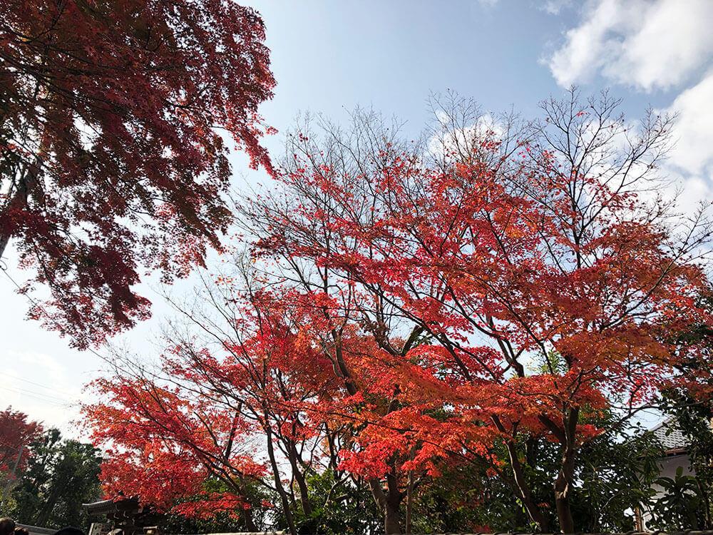 tohukuji_kouyo_04_01