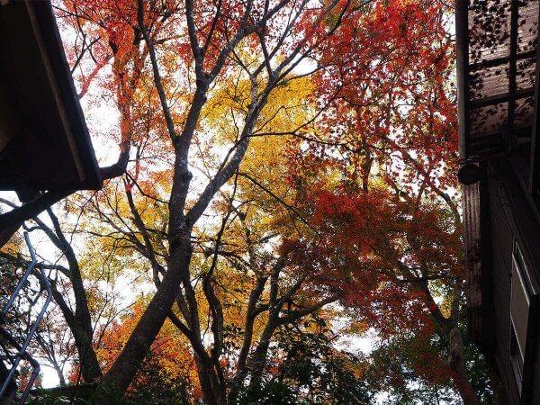 1130_kouyou_arashiyama01