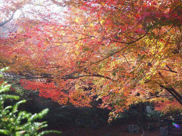 1130_kouyou_arashiyama02