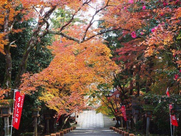 1130_kouyou_arashiyama06