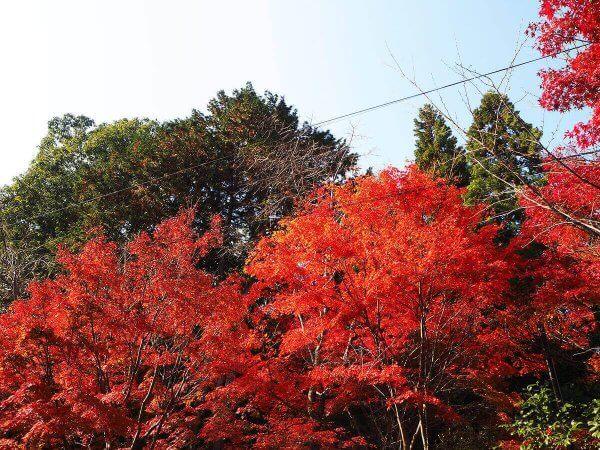 1130_kouyou_arashiyama11