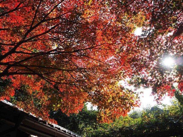 1130_kouyou_arashiyama12
