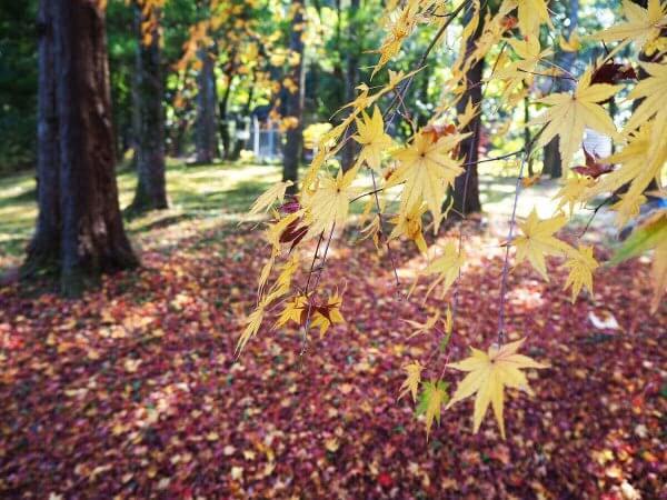 1130_kouyou_arashiyama13