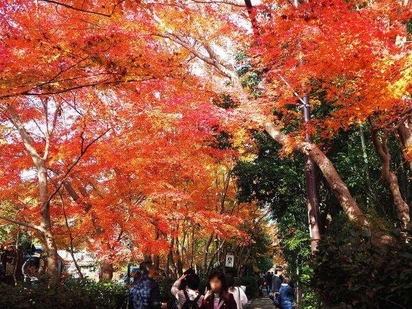 1130_kouyou_arashiyama15