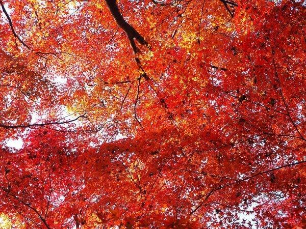 1130_kouyou_arashiyama16