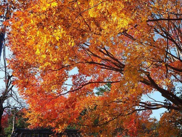 1130_kouyou_arashiyama17