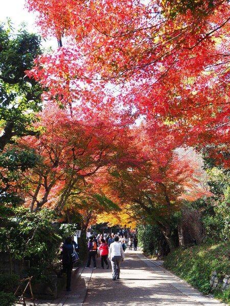 1130_kouyou_arashiyama18