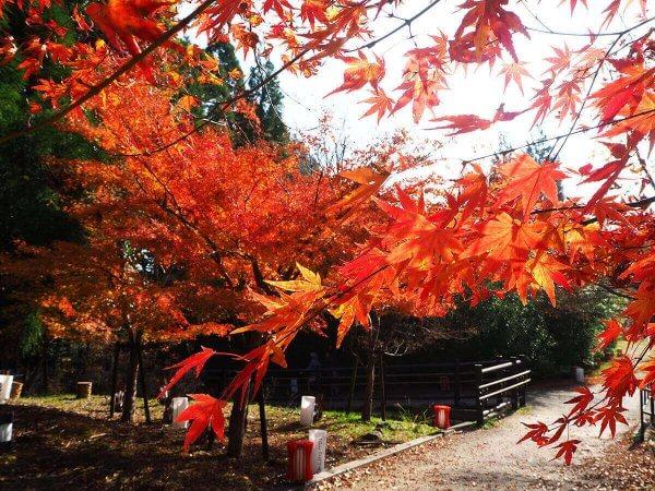 1130_kouyou_arashiyama19
