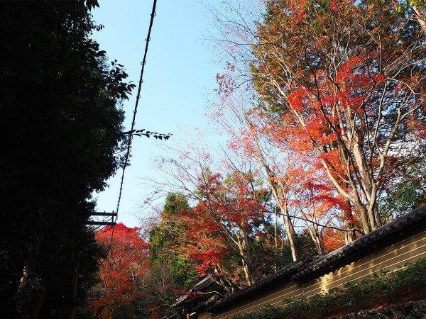 1130_kouyou_arashiyama20