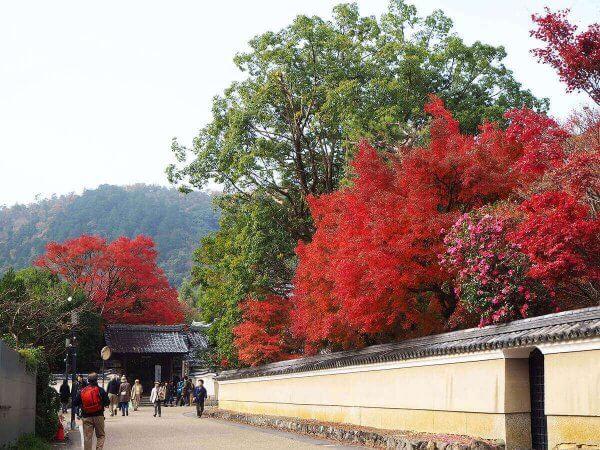1130_kouyou_arashiyama21