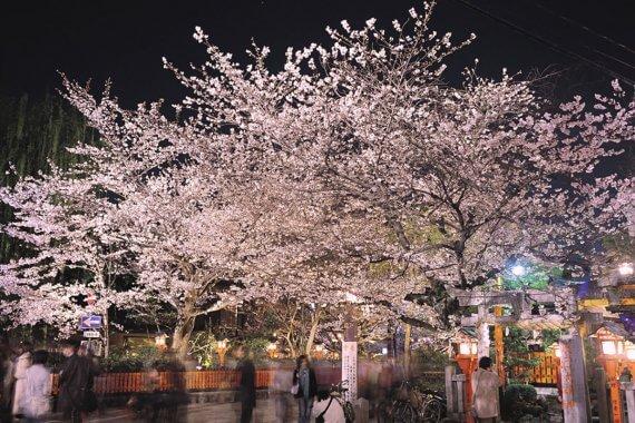 京都・桜ライトアップ 7選