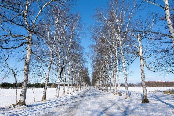 自然が織りなすふたつとない世界!北海道で雪と氷を楽しんでみた