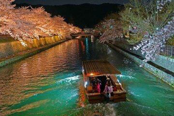 京都・桜ライトアップニュース