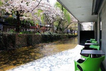京都桜の見える店