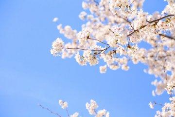 京都・滋賀のイベント情報をチェック