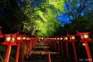 京都・青紅葉が美しいスポットへ