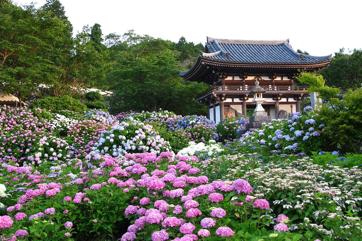 梅雨の季節のお出かけに!京都・滋賀のアジサイ名所7選