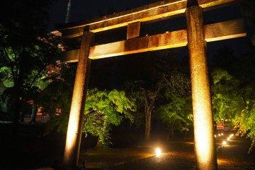 仁和寺で青もみじライトアップが初開催!守りたい風景を未来へ残す取り組み始動